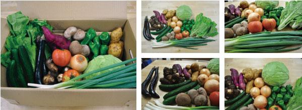 10月3日発送分の九州野菜セット