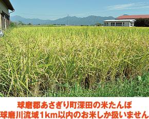 球磨郡あさぎり町深田の米たんぼ 球磨川流域1km以内のお米しか扱いません