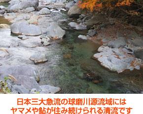 日本三大急流の球磨川源流から採水 ヤマメや鮎が住み続けられる清流です