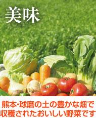 熊本・球磨の土の豊かな畑で収穫されたおいしい野菜です