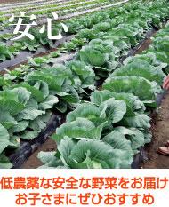 低農薬の安全な野菜をお届け お子さまにぜひおすすめ