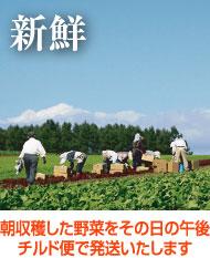 朝収穫した野菜をその日の午後チルド便で発送いたします