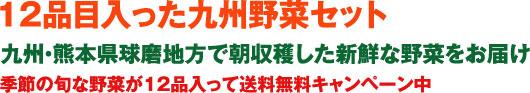 12品目入った九州野菜セット